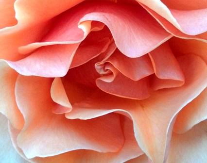 Mercy Rose