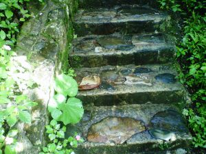 steps in the PR rainforest r